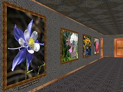 Flowers in a Rectangular Gallery